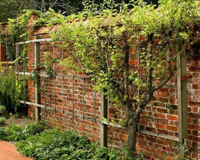Виноград способен произрастать на любой опоре