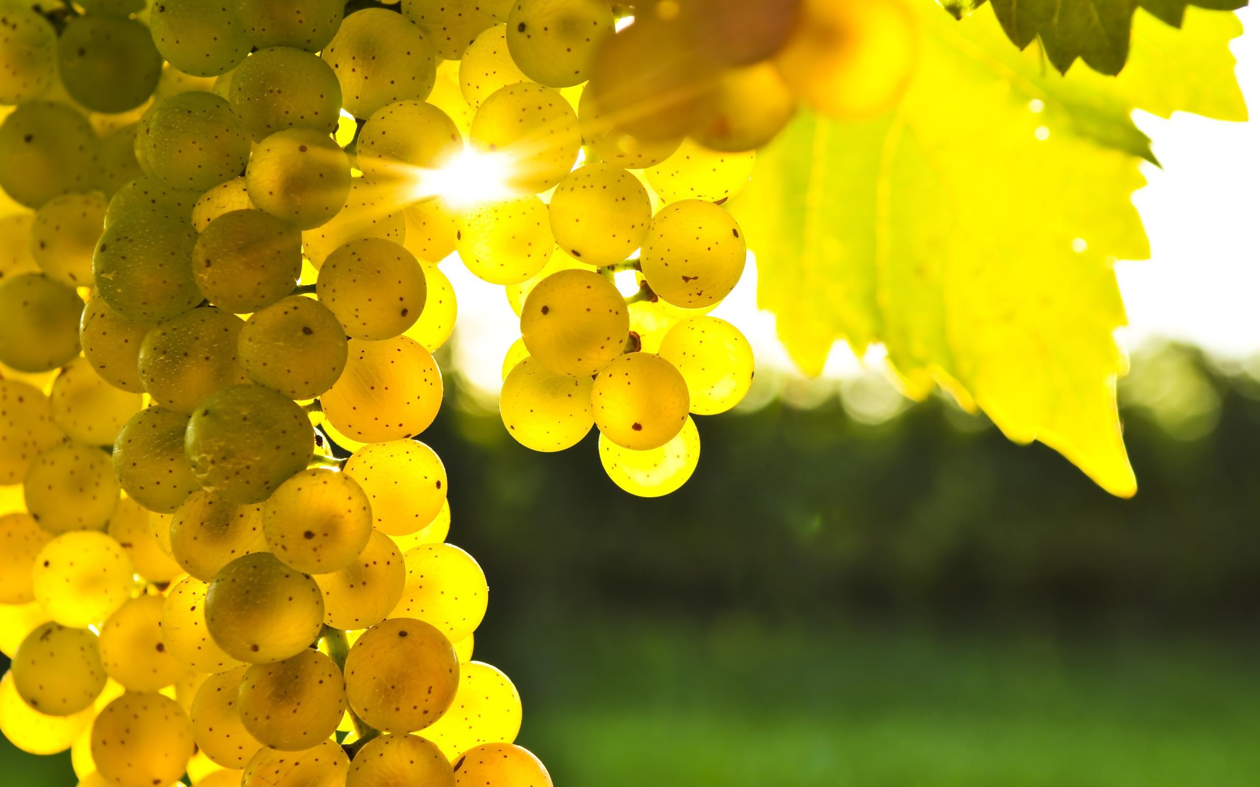 Белый виноград оказывает максимальный эффект для здоровья