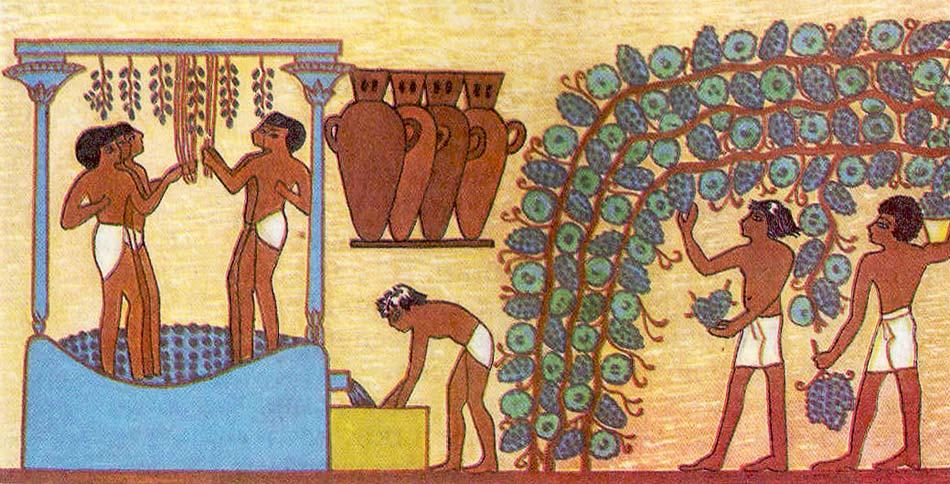 Рисунки винограда в Египте