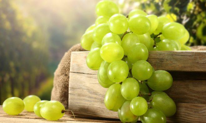 Уход за виноградом - тяжелый и кропотливый труд