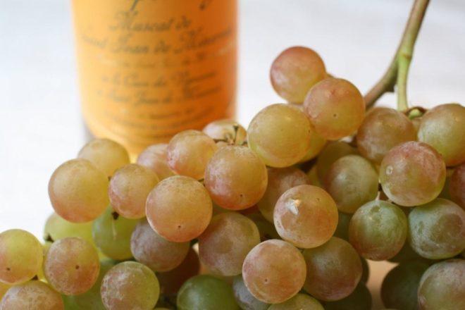 """Виноград сорта """"Тимур"""" появился относительно недавно"""