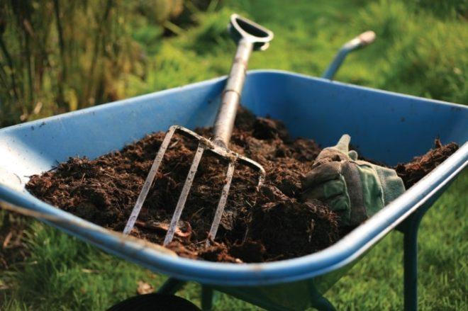 Обязательным моментом является внесение органического удобрения – навоза или птичьего помета