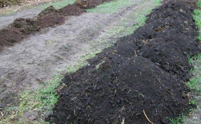 Борная кислота также потребуется при подготовке грунта для виноградного куста