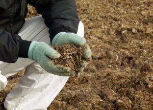 Подкормка винограда коровяком рекомендуется не чаще чем два раза за сезон