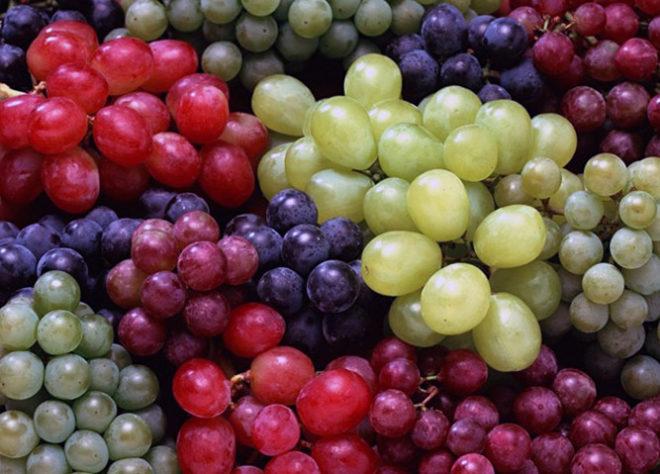 На сегодняшний день существует около 5000 сортов винограда
