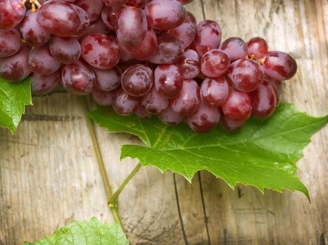 Виноградное растение было окультурено человеком одним из первых